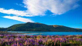 Nueva Zelanda: Cinco razones para visitarla durante la primavera