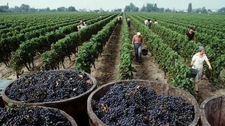 Bolivia prohibió la importación de uva y vinos por tres meses